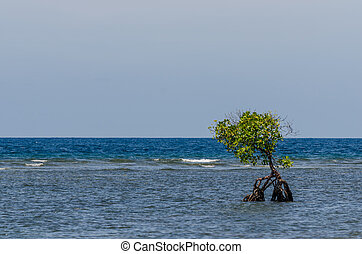 mangrove at the sea with wide horizon