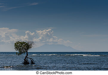 mangrove at the sea and sky with clouds