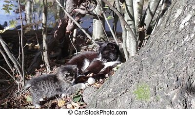 Cat and two kittens bask in sun