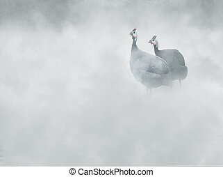 Helmeted guineafowl (Numida meleagris) in the fog,
