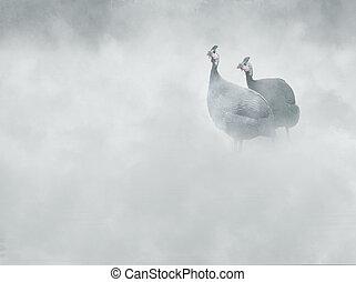 Helmeted guineafowl (Numida meleagris) in the fog,