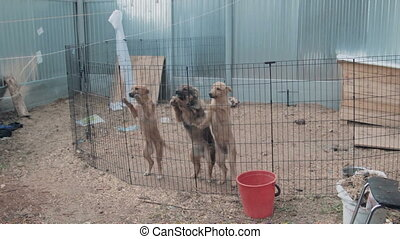 Adorable cute puppy dogs in shelter, wide angle