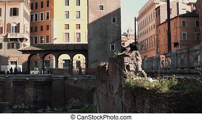 View of square of Largo di Torre Argentina in Rome, Italy....