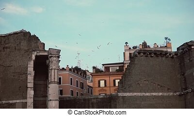 View to the old town ruins and birds on the background....