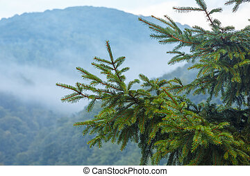 Evening mist in mountain. - Evening mist over slope of...