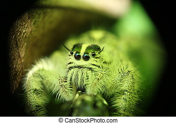 cute little green spider catch with macro lens photo