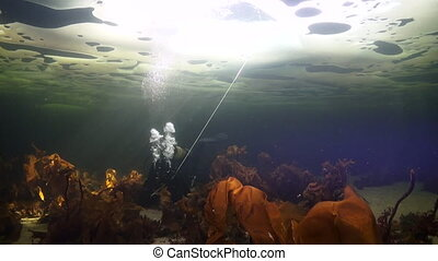 Unique shooting of diver underwter on seabed in ice of White...