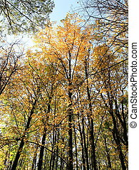 trees in autumn on sky background, spetember