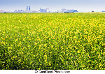 Canola Field on the Prairies - Canadian potash mine on the...