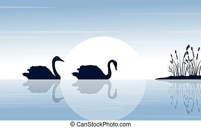 Silhouette of two swan on lake scenery