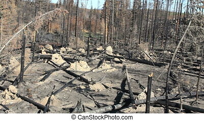 Forest Fire Devastation - pan of devastation from british...