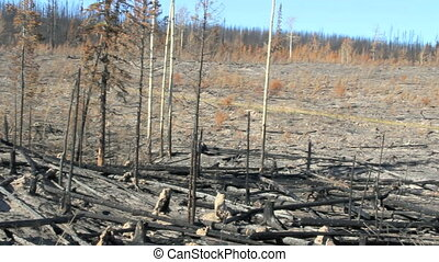 Burnt Landscape - pan of devastation from british columbia...