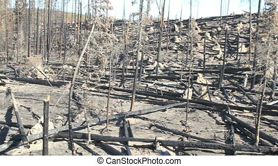 Devastation Of Forest Fire - pan of devastation from british...