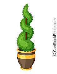 Boxwood topiary garden plant. Decorative tree in flowerpot.