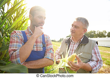 Talking about recent corn crop
