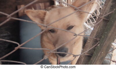 A homeless dog in cage at animal shelter, close up