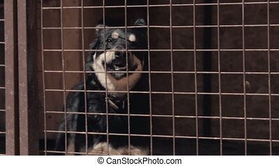 A homeless blck dog in cage at animal shelter - pooch, close...