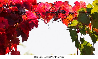Leaves of red and green