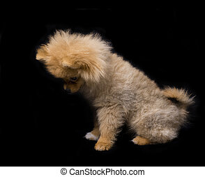 Picture of wonderful cute dog on a black background