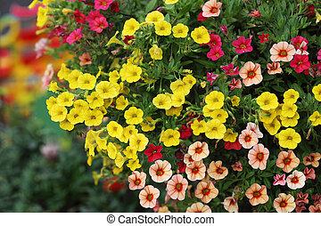 Pentunias Flower - Part of hanging Hybrid pentunias flower...