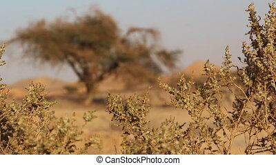 change focus desert - Shot of change focus desert