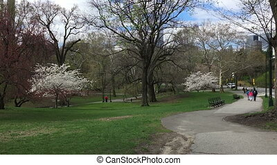 Central Park NY - Shot of Central Park NY