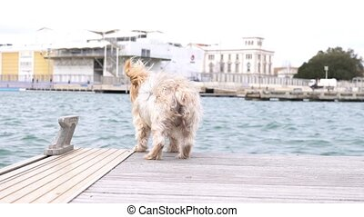 Dog looking at the sea and suddenly turns around surprised.