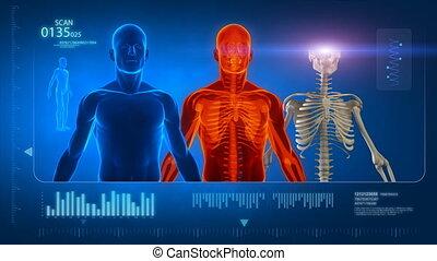 Male medical scan in loop