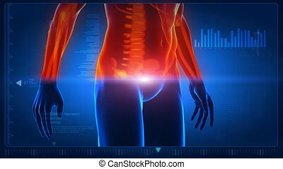Human body scan part 2 - Anatomy concept