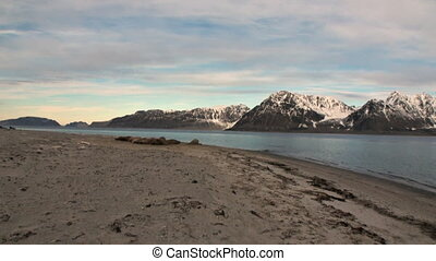 Group of walruses relax on sunset background of Arctic Ocean...