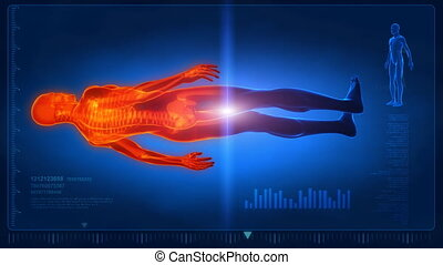 Whole humna body medical scan - Anatomy concept