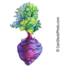 Fresh purple cabbage kohlrabi with green leaves (German...