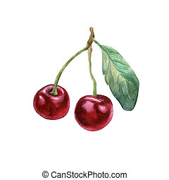 Cherries. Hand drawn watercolor painting on white...