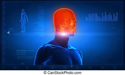 Human head scan in loop - Anatomy concept