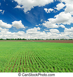 spring green field and blue cloudy sky