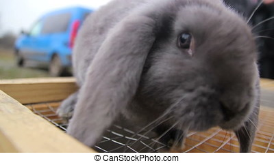 Looking on the bunny near cage