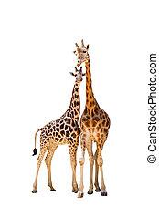 dos, jirafa