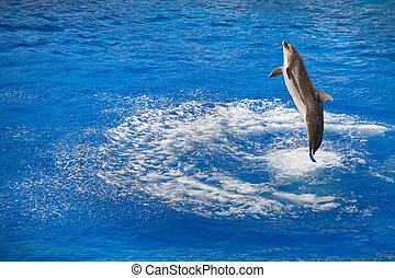 bottlenose dolphin jumping out of water - bottlenose dolphin...