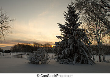 Winter Scene - Tree and snow covered ground at early morning...