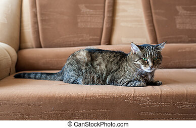 cat on a sofa - Gray cat with green eyes on a sofa