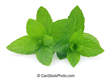 Spearmint - Fresh spearmint on a white background