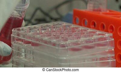 Researcher Blood culture - Shot of Researcher Blood culture