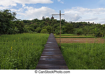 Wooden walking path leading over rice field, natural...