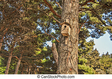 Bird house hanging from the tree with the entrance hole in...