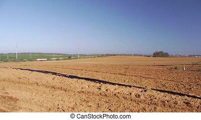 Field in summertime - Shot of Field in summertime