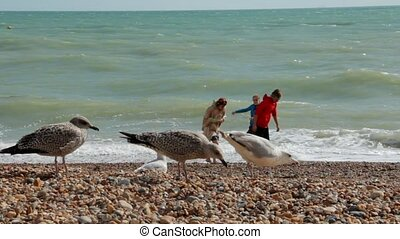 UK, Brighton. Three young people on summer vacation standing on the beach near the water of Atlantic ocean. The guy throws pebbles into the ocean. The seagulls are walking on the foreground.