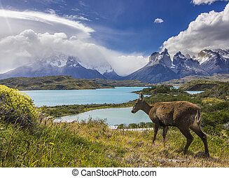 deer feeding on grass field near lake and mountains in...