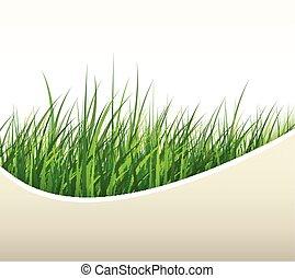 Natural background green grass