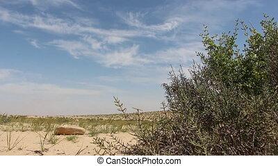 Desert background - Shot of Desert background
