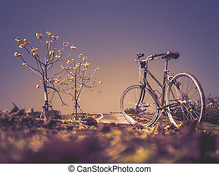 Bicycle with flower trees in garde